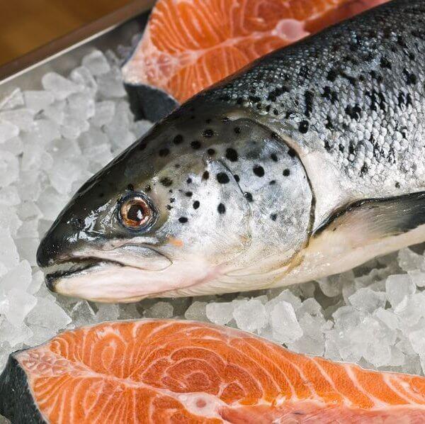 Saumon Le marché aux poissons à Fécamp