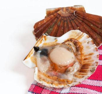 Coquilles saint jacques Le marché aux poissons à Fécamp
