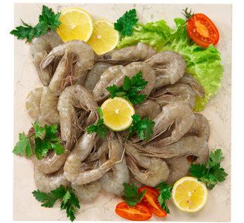 Crevettes grises vivantes